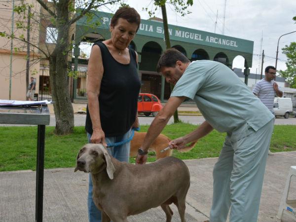 La vacunación de perros y gatos es la principal medida para prevenir la rabia