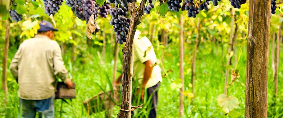 El sábado 7 y domingo 8 de julio viviremos en Berisso la XV Fiesta del Vino de la Costa
